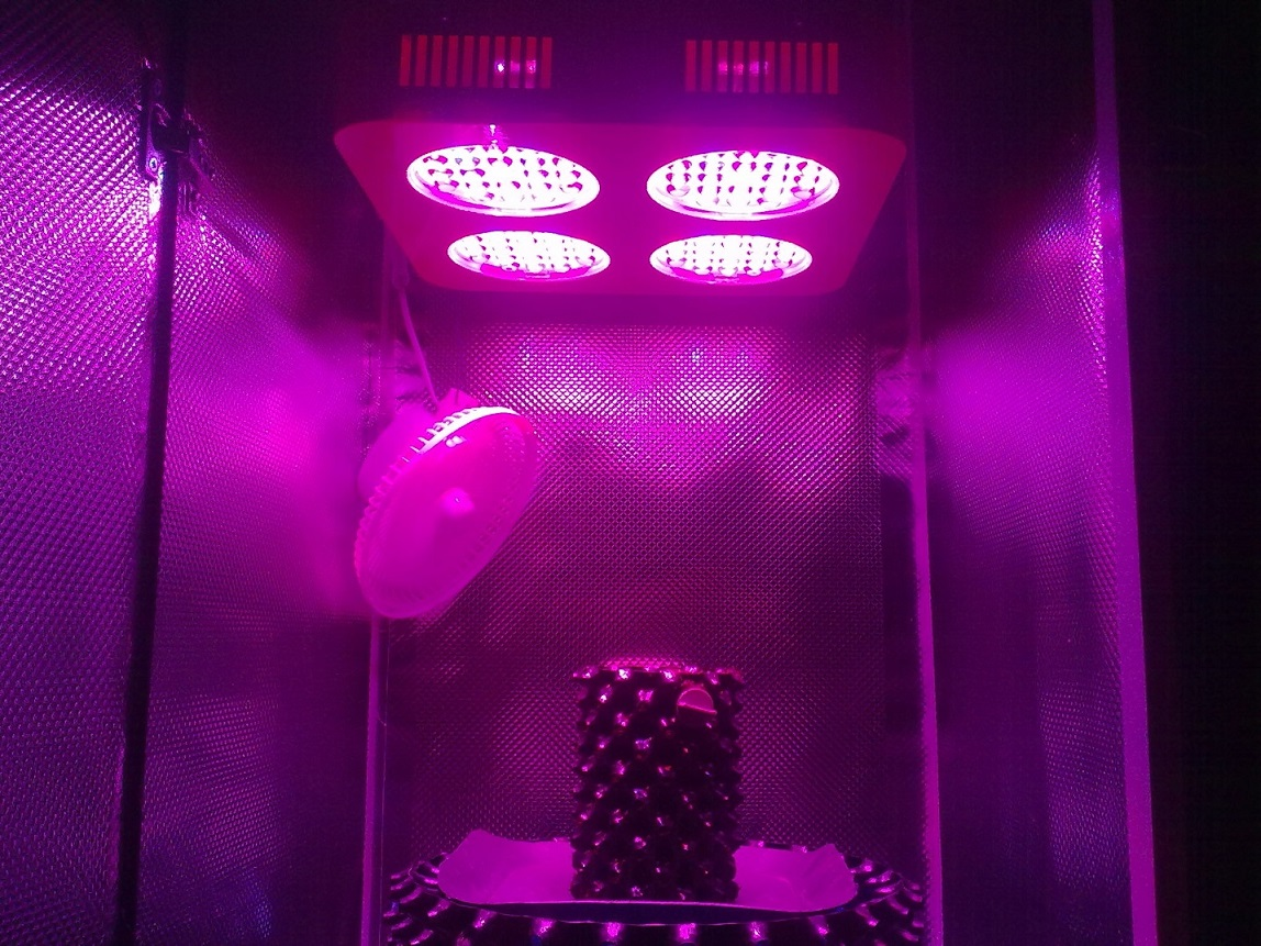 Photon Pro 4 BlackJack Auto Grow. Start (9).jpg