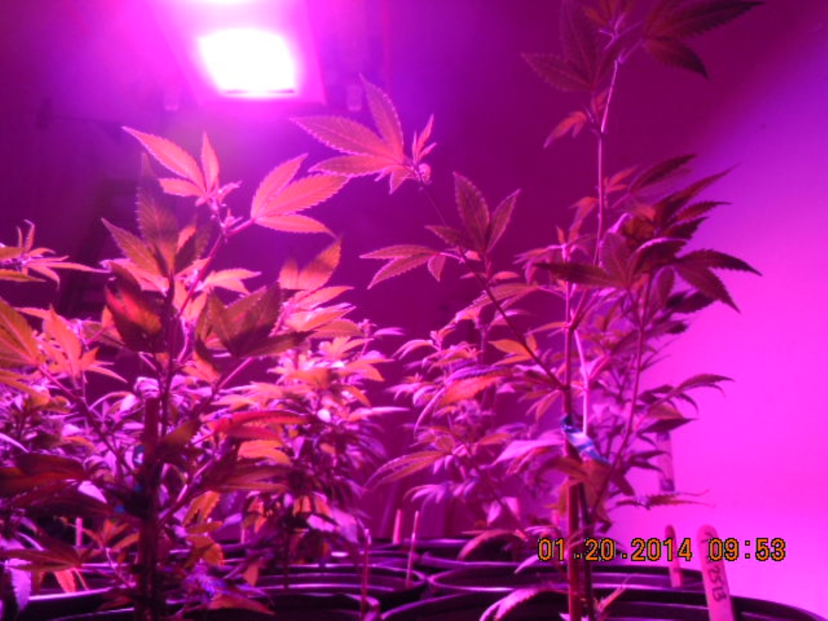 LED 012014  repotted right back ...   hero  hero.jpg