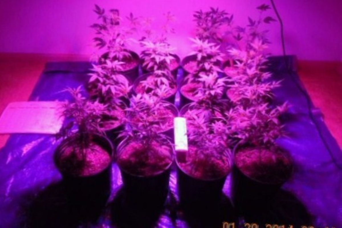 LED 012014  repotted.jpg
