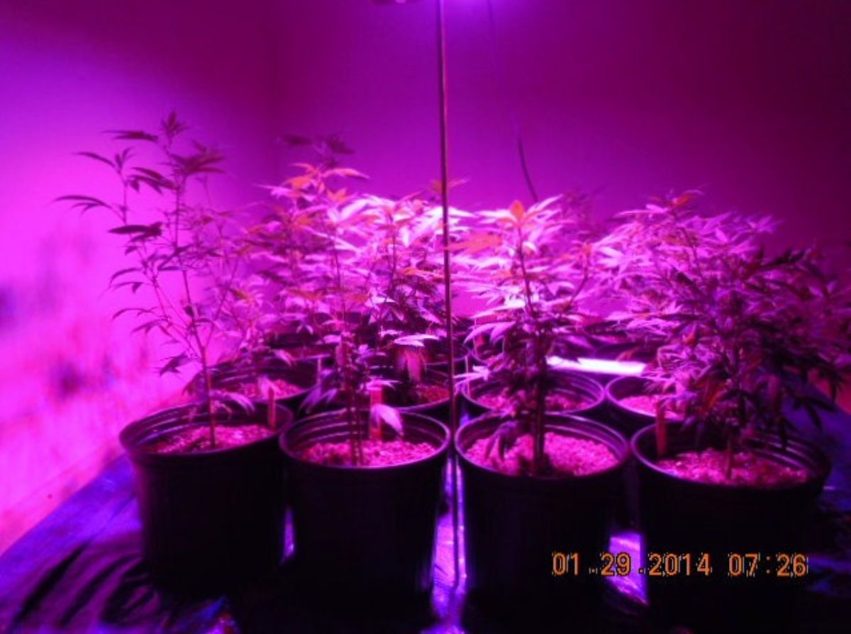 LED 012914  left    banana og  banana og  purple dog  chz.jpg